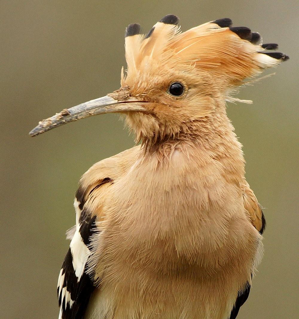 马丁斯雀鸟保护区-------苍鹭.戴胜鸟_图1-12