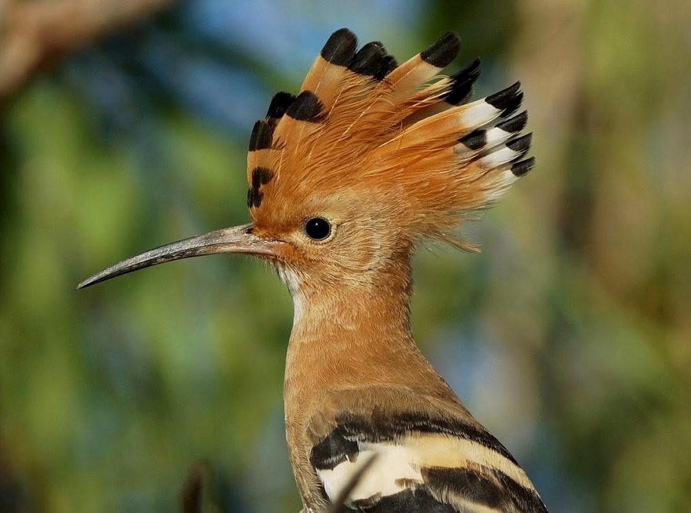 马丁斯雀鸟保护区-------苍鹭.戴胜鸟_图1-13