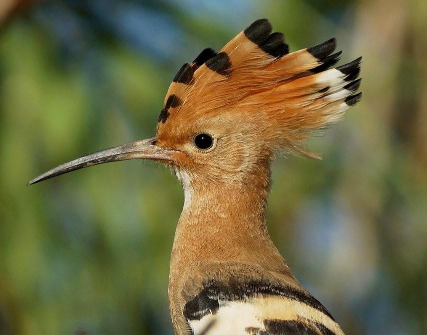 马丁斯雀鸟保护区-------苍鹭.戴胜鸟_图1-14