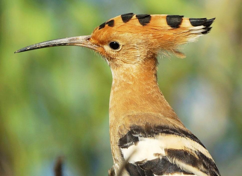 马丁斯雀鸟保护区-------苍鹭.戴胜鸟_图1-15