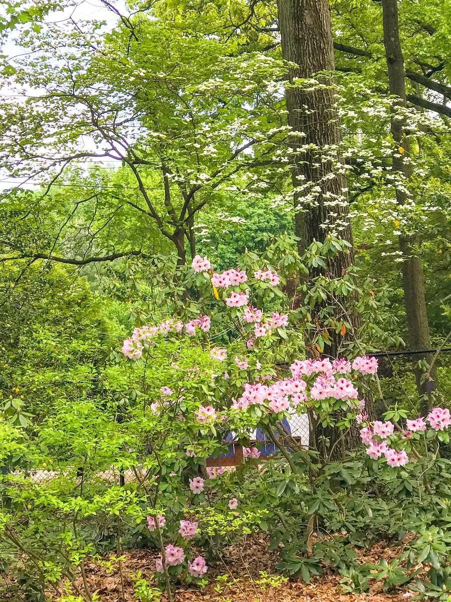 春天的画面_图1-26