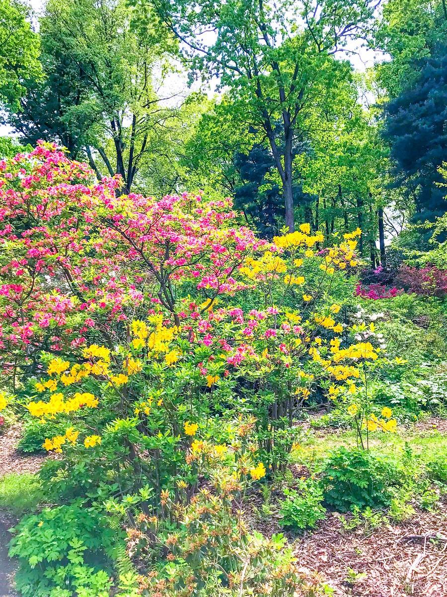 春天的画面_图1-24
