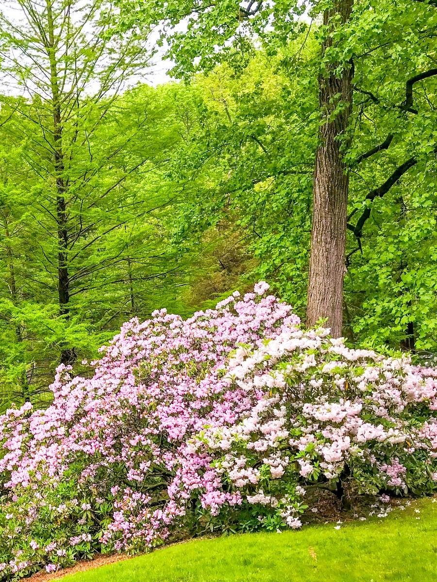 春天的画面_图1-15