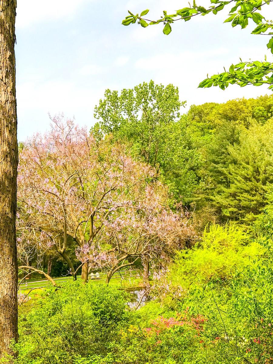 春天的画面_图1-19