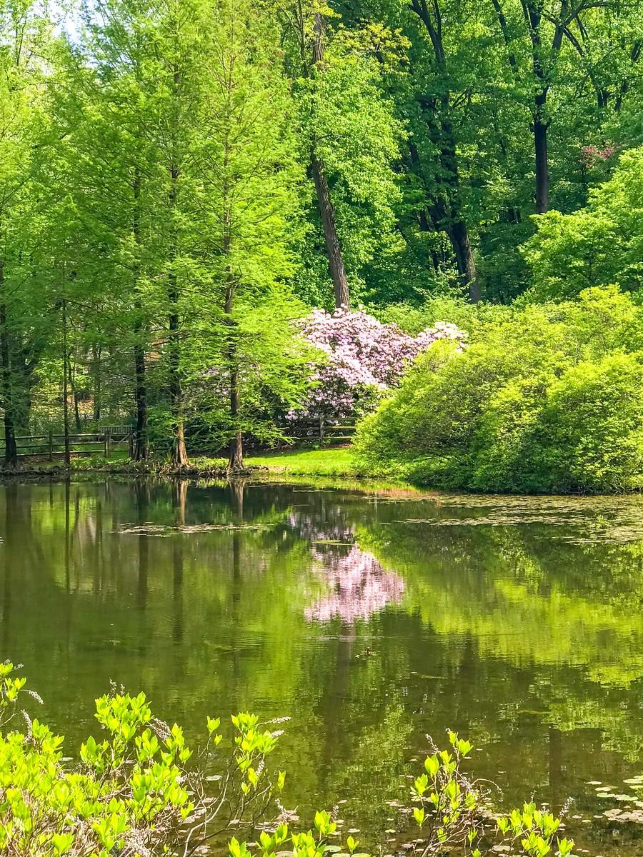春天的画面_图1-20