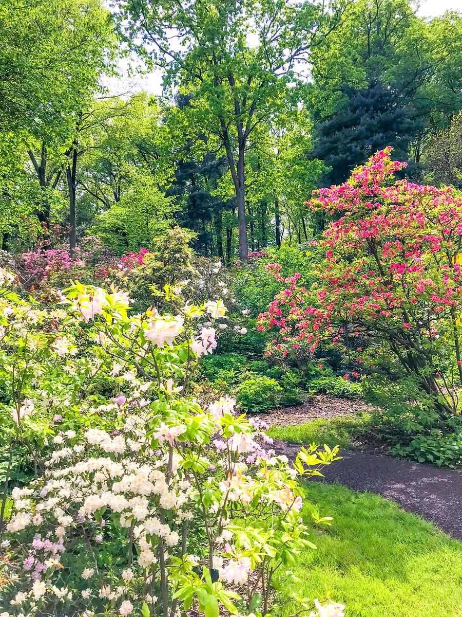 春天的画面_图1-13