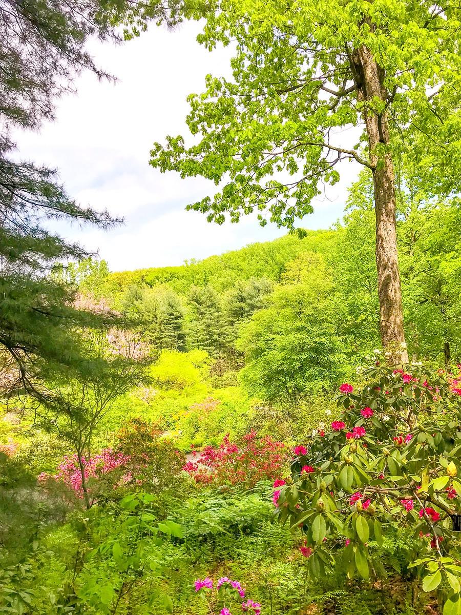 春天的画面_图1-9