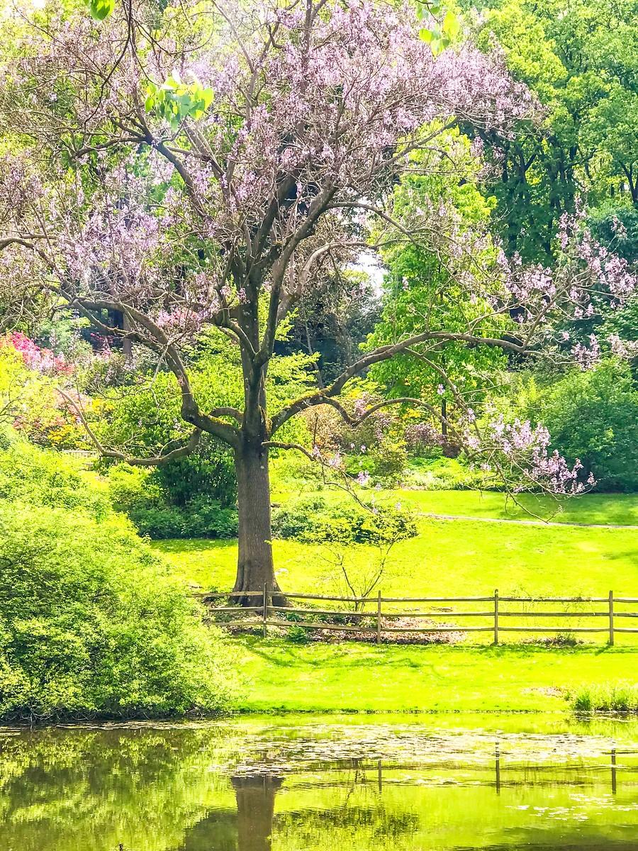 春天的画面_图1-1