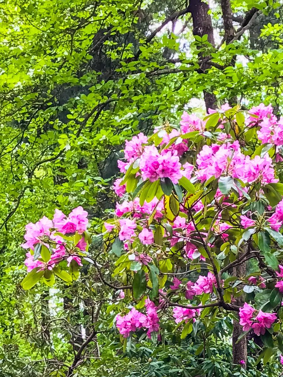 春天的画面_图1-4
