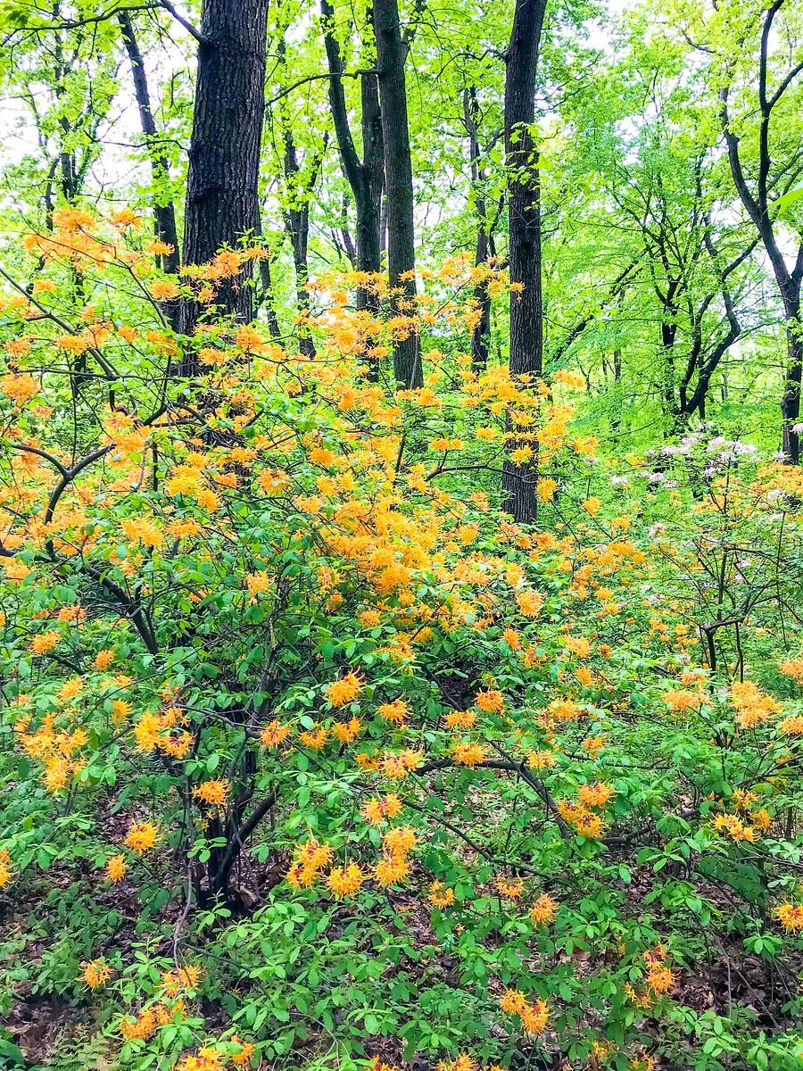 春天的画面_图1-5