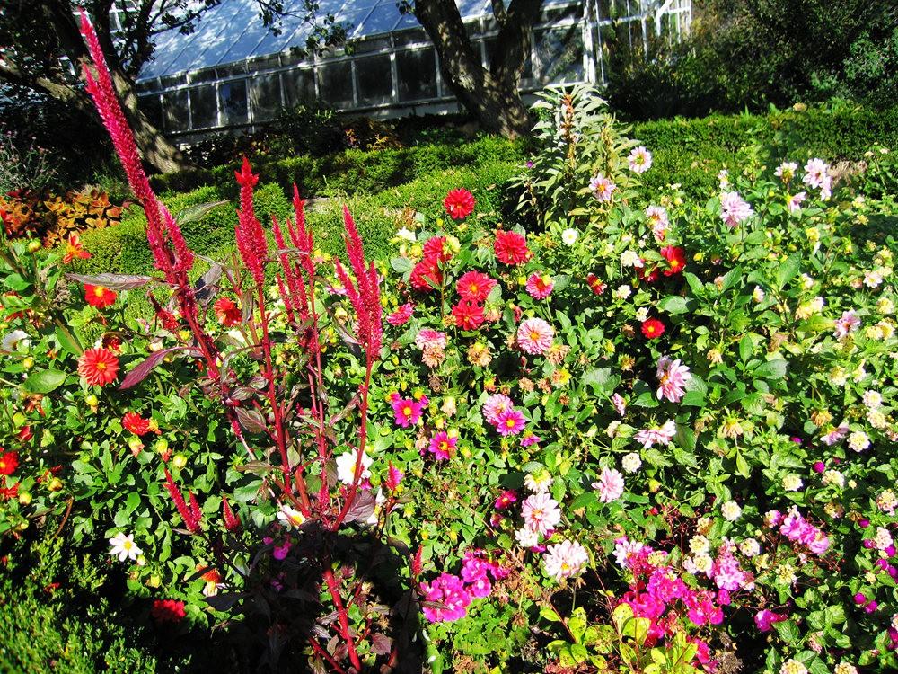 漫游史岛植物园---3_图1-4