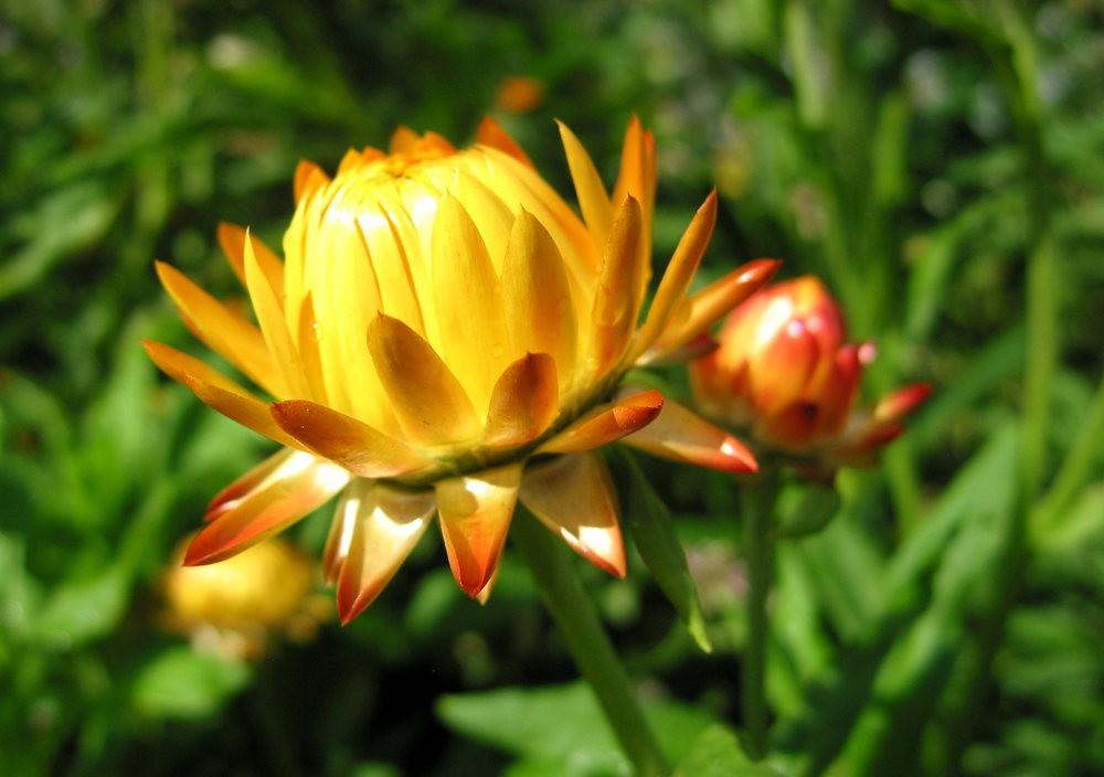 漫游史岛植物园---3_图1-15