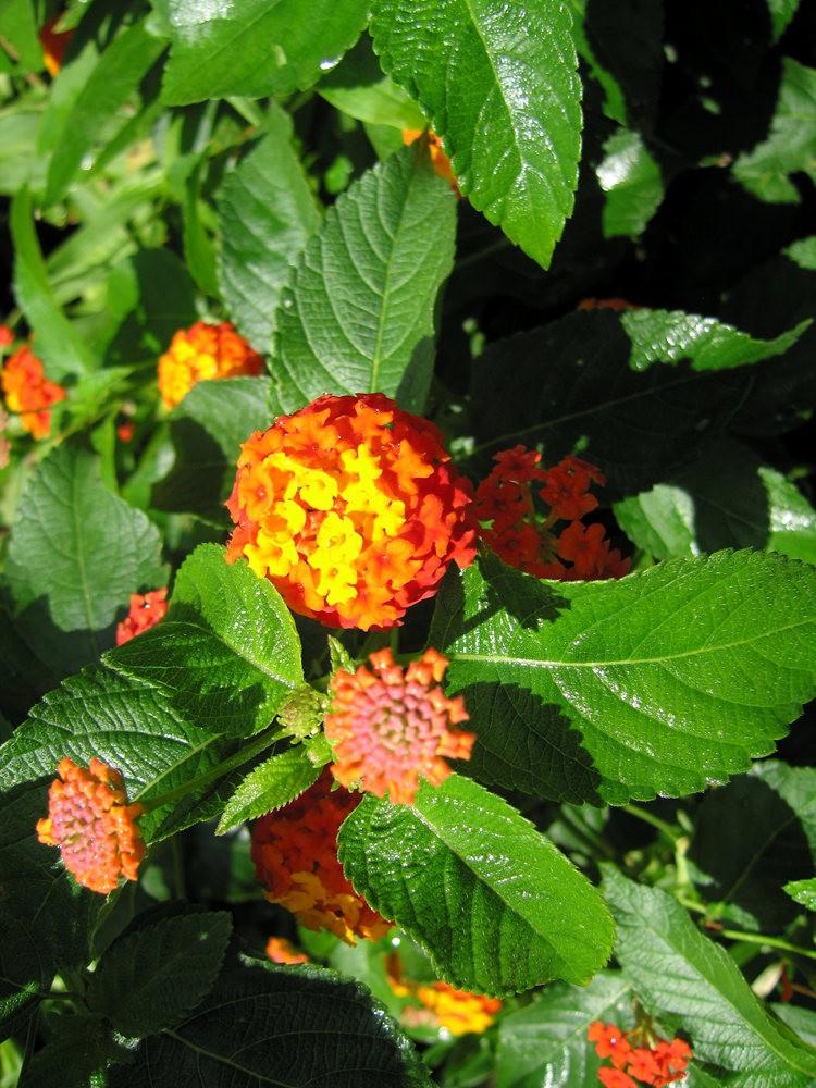 漫游史岛植物园---3_图1-19