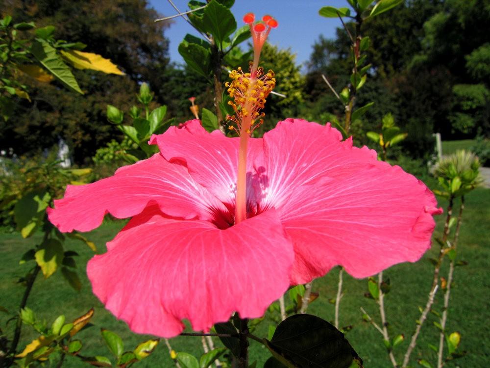漫游史岛植物园---3_图1-25