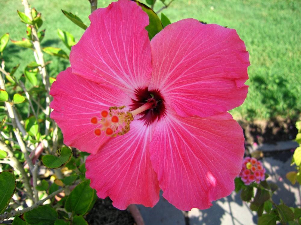 漫游史岛植物园---3_图1-26