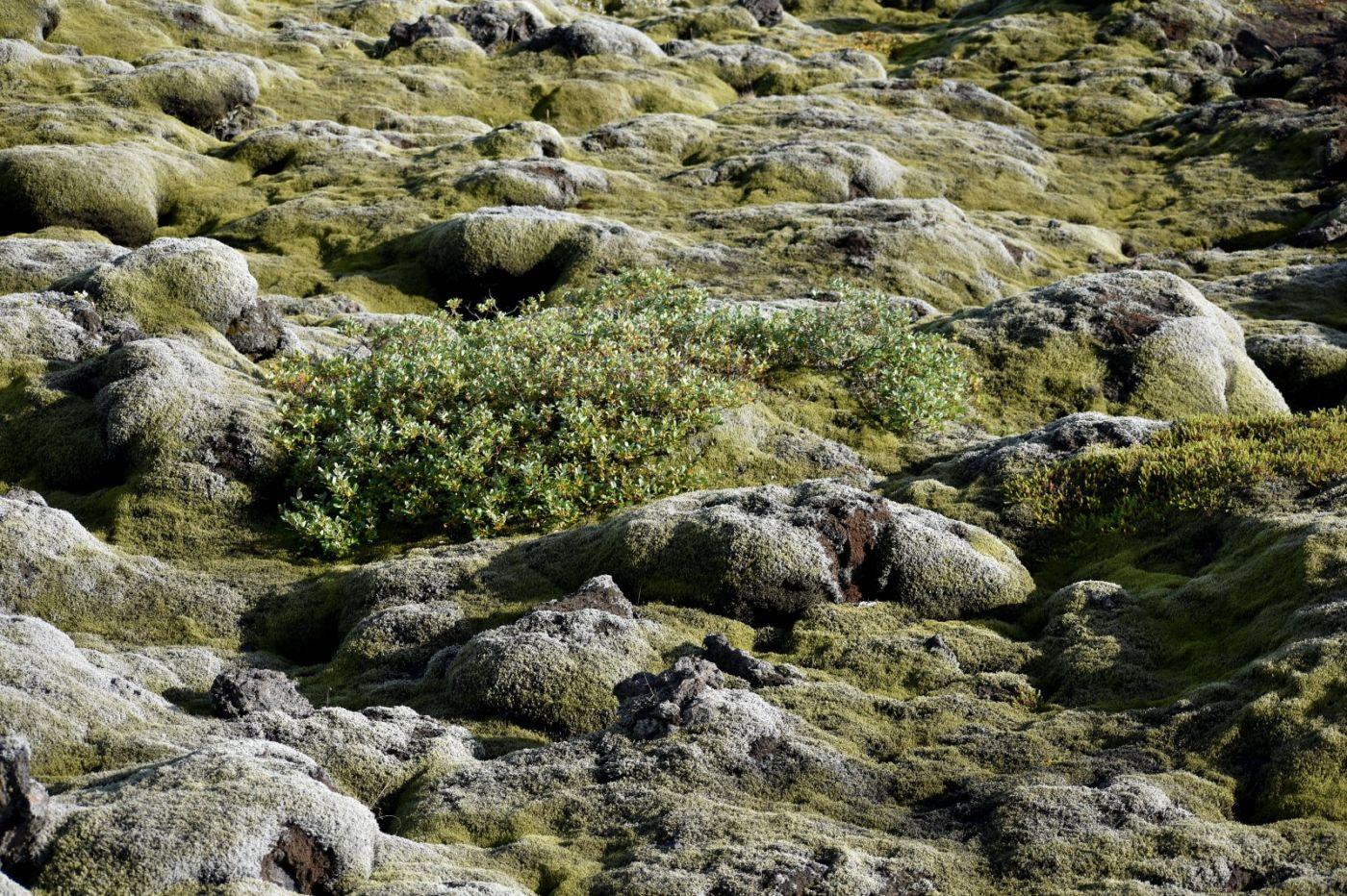 冰岛蓝湖温泉和苔原_图1-27