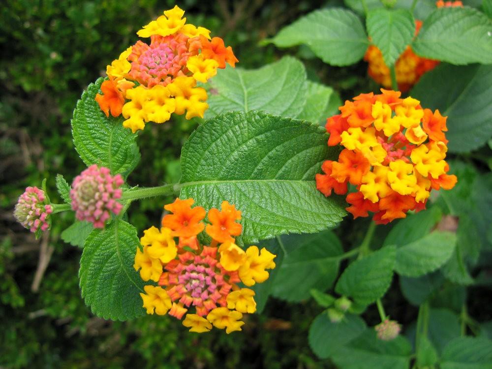 漫游史岛植物园---4_图1-23