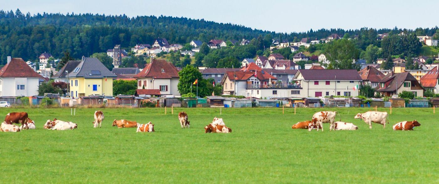 瑞士旅途,美丽的家园_图1-20