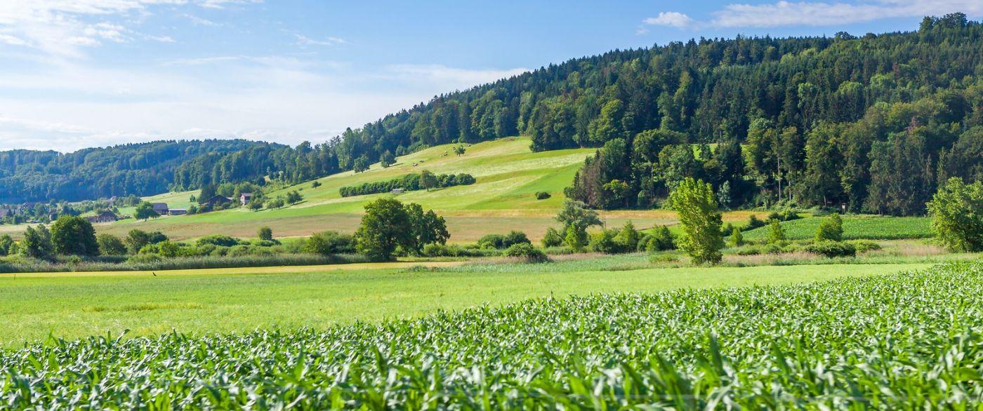 瑞士旅途,美丽的家园_图1-17