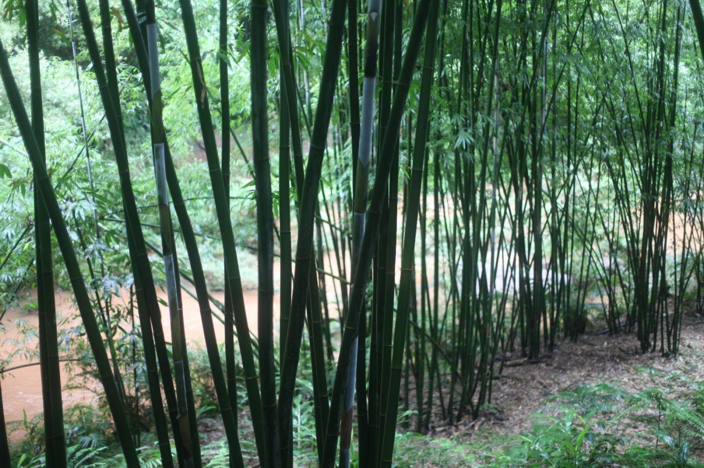 孕育了天赐尤物茅台酒的山野、林莽、溪流和河水那个空间_图1-2
