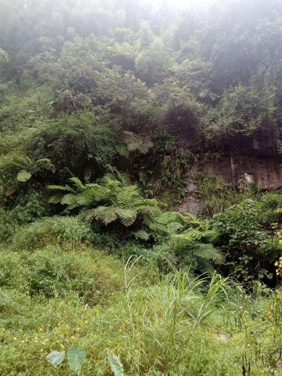 孕育了天赐尤物茅台酒的山野、林莽、溪流和河水那个空间_图1-13