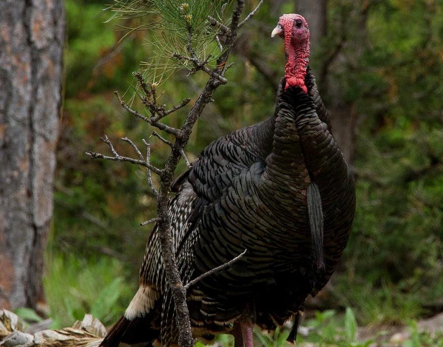 南达科他州的野生动物_图1-9