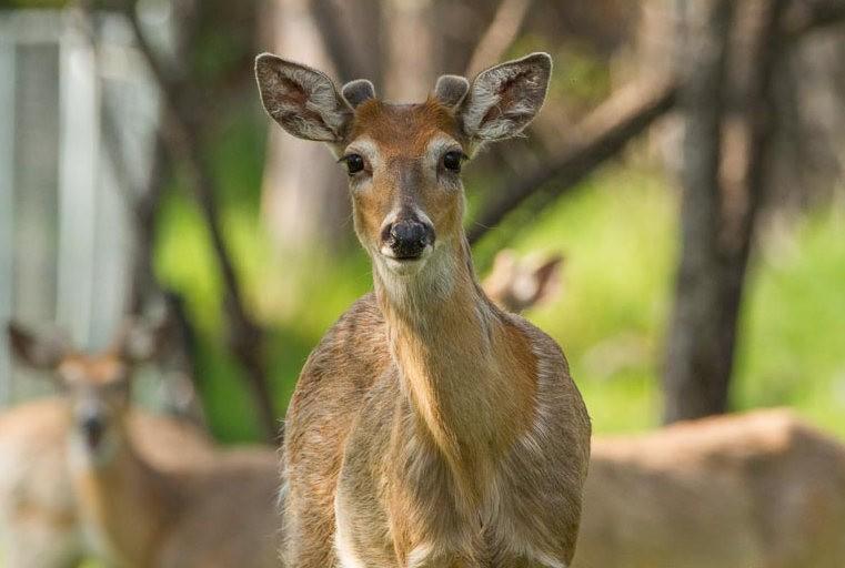 南达科他州的野生动物_图1-10
