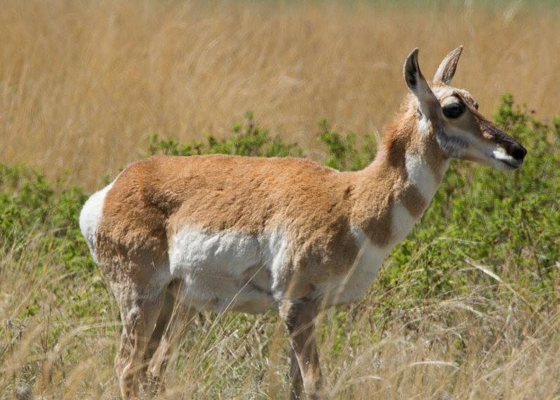 南达科他州的野生动物_图1-11