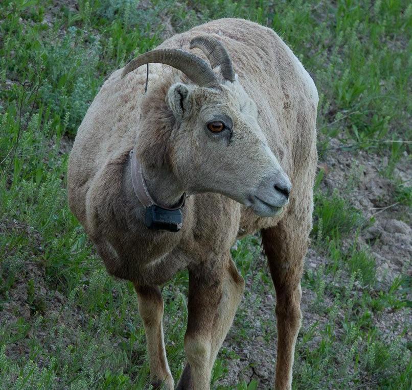 南达科他州的野生动物_图1-18