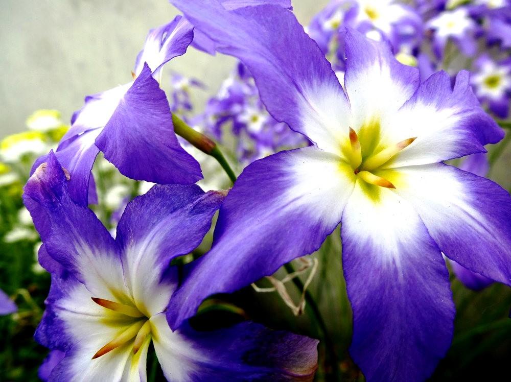 回顾--皇家植物园之罕见植物_图1-5