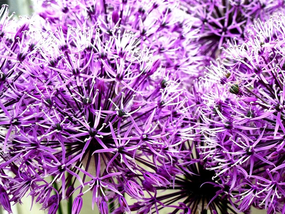 回顾--皇家植物园之罕见植物_图1-7