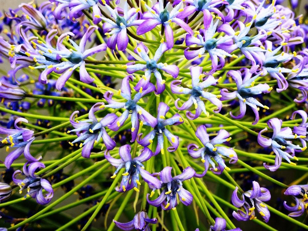 回顾--皇家植物园之罕见植物_图1-11