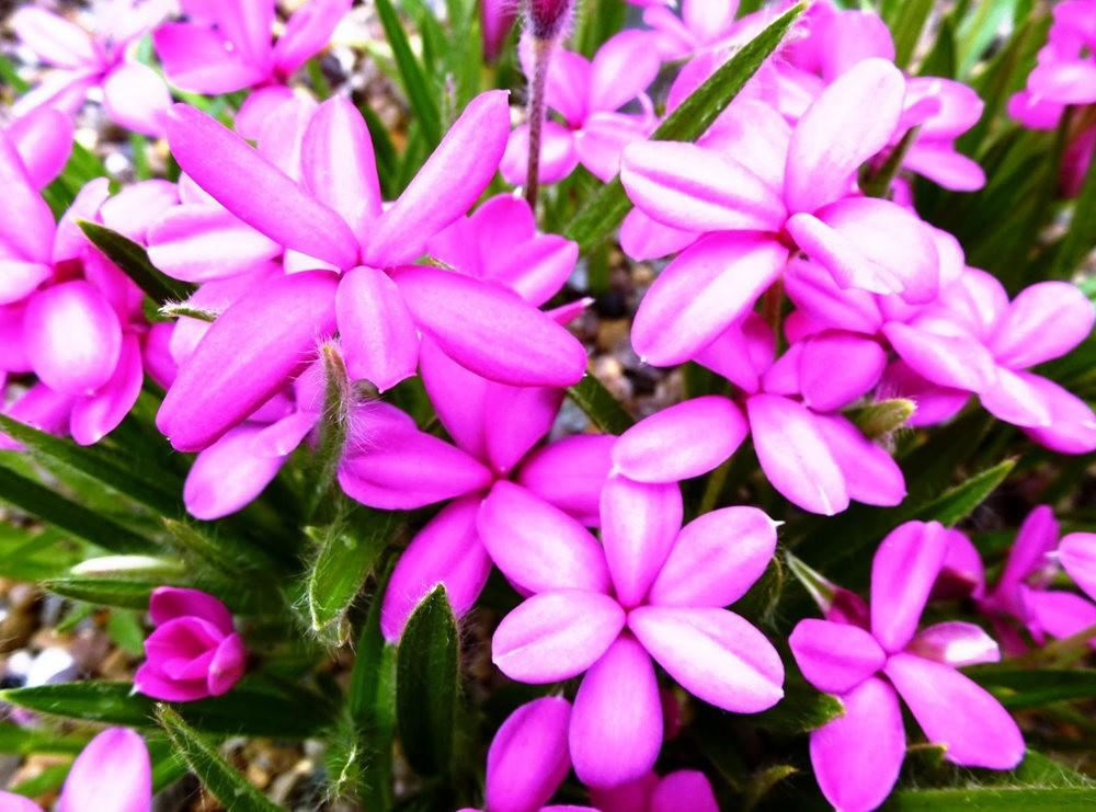 回顾--皇家植物园之罕见植物_图1-12