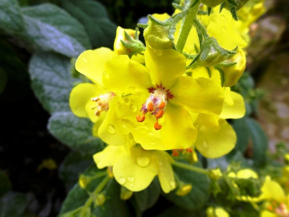 回顾--皇家植物园之罕见植物_图1-14