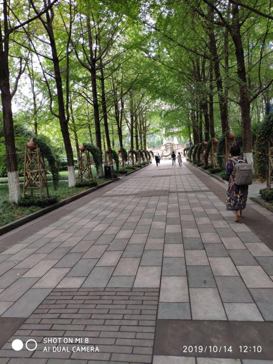 今天,被记者骗到人民公园看芙蓉花_图1-19