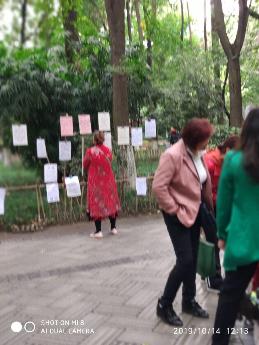今天,被记者骗到人民公园看芙蓉花_图1-13