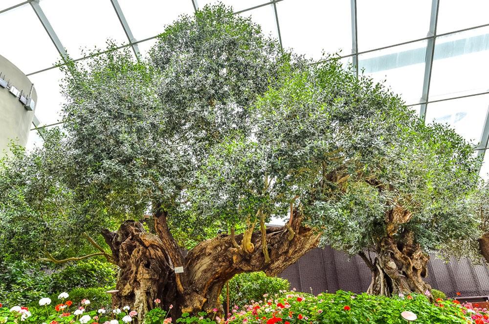 滨海湾花园与花穹---2_图1-5
