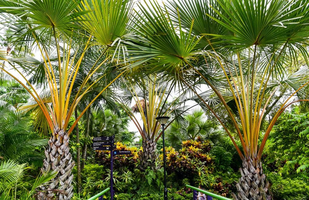 滨海湾花园与花穹---2_图1-15