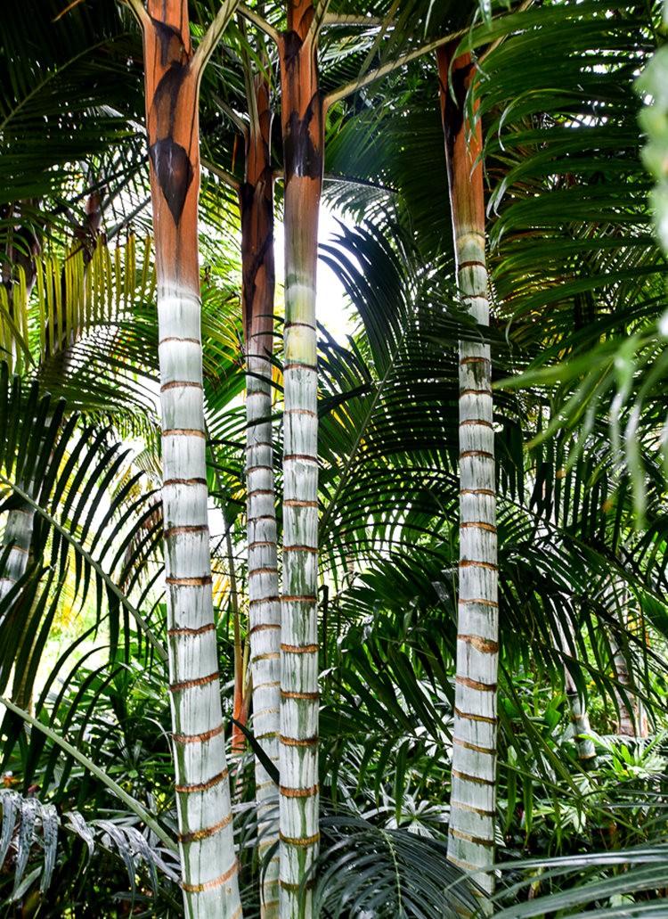 滨海湾花园与花穹---2_图1-19