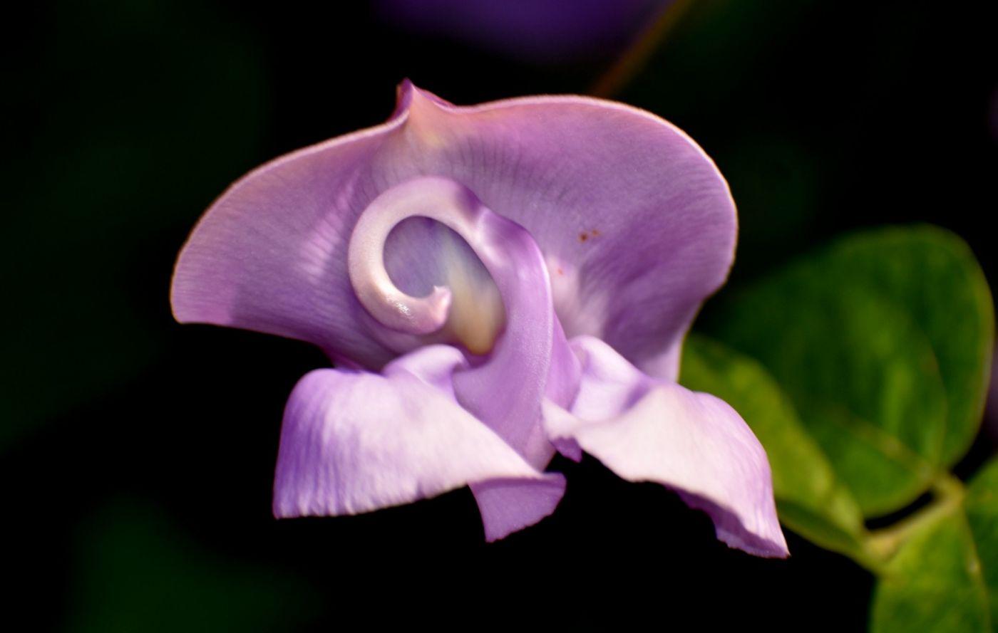 蜗牛花_图1-3