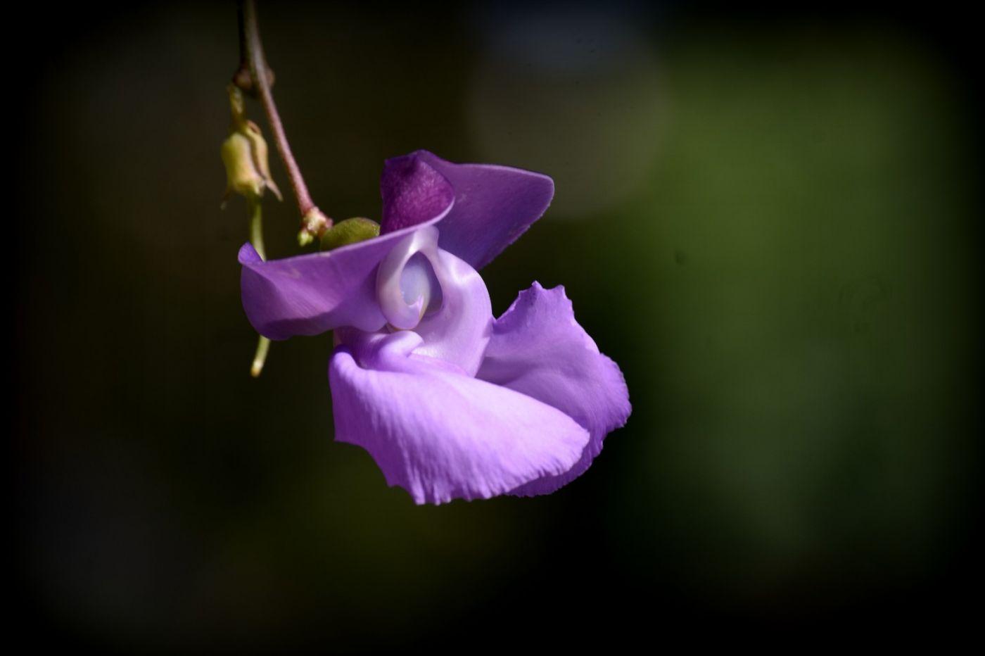 蜗牛花_图1-9