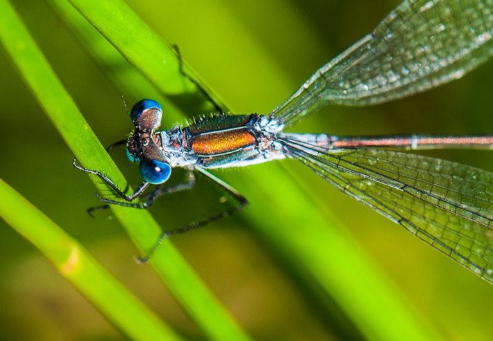 微距下----昆虫与花_图1-1