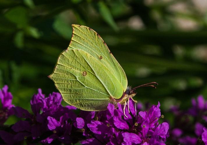 微距下----昆虫与花_图1-2