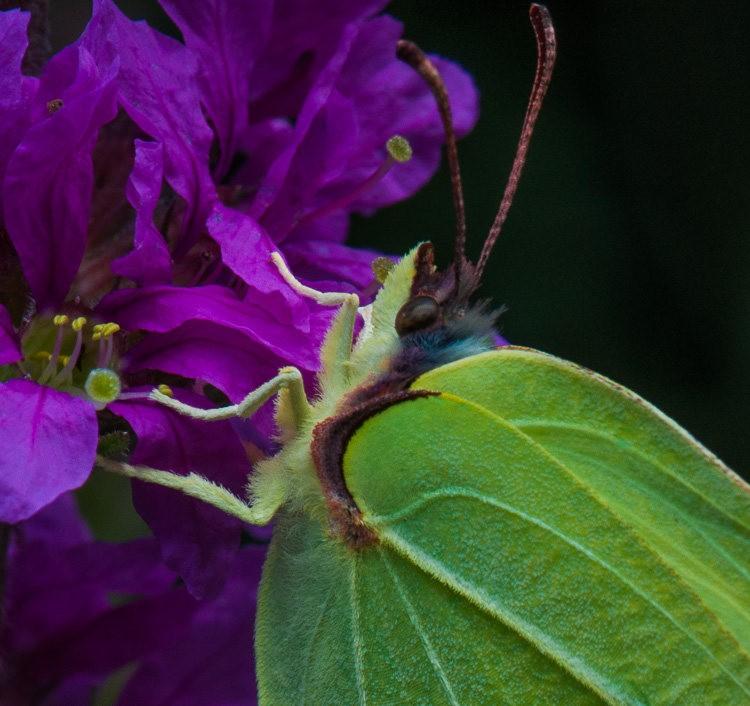 微距下----昆虫与花_图1-3