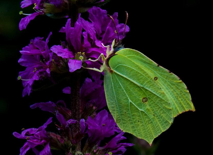 微距下----昆虫与花_图1-4