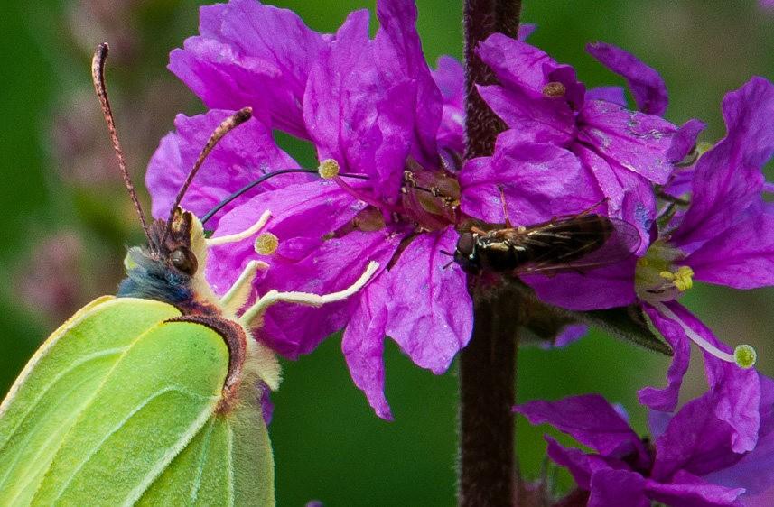微距下----昆虫与花_图1-5