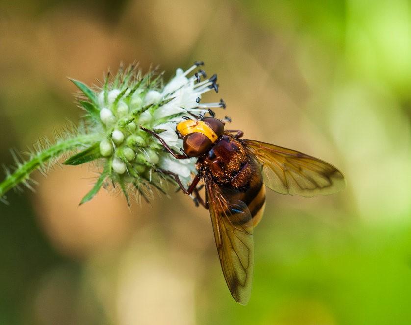 微距下----昆虫与花_图1-8