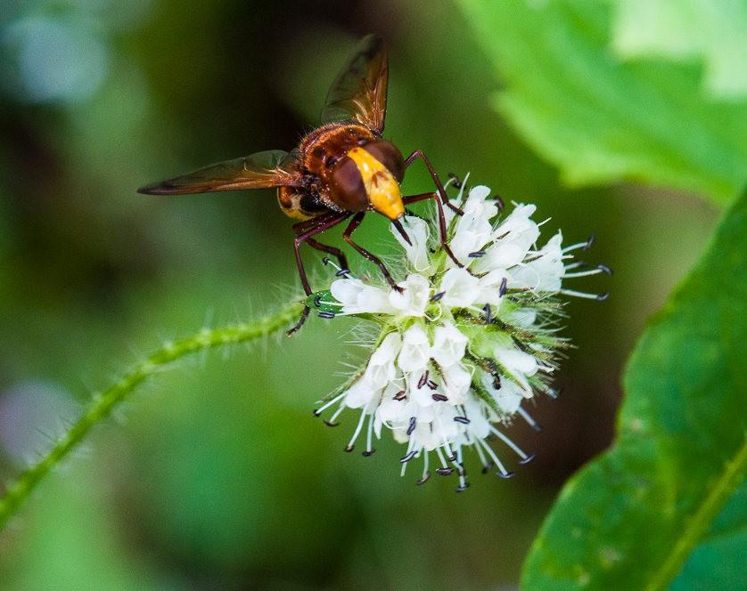 微距下----昆虫与花_图1-9