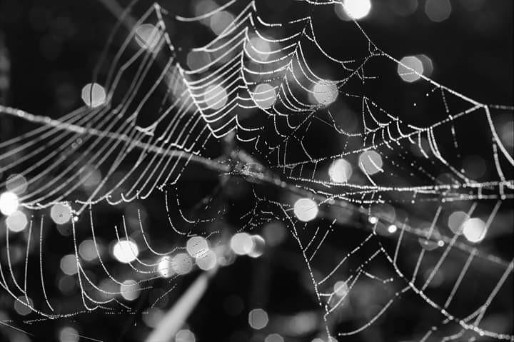 【爱摄影】树络蜘蛛缕_图1-7