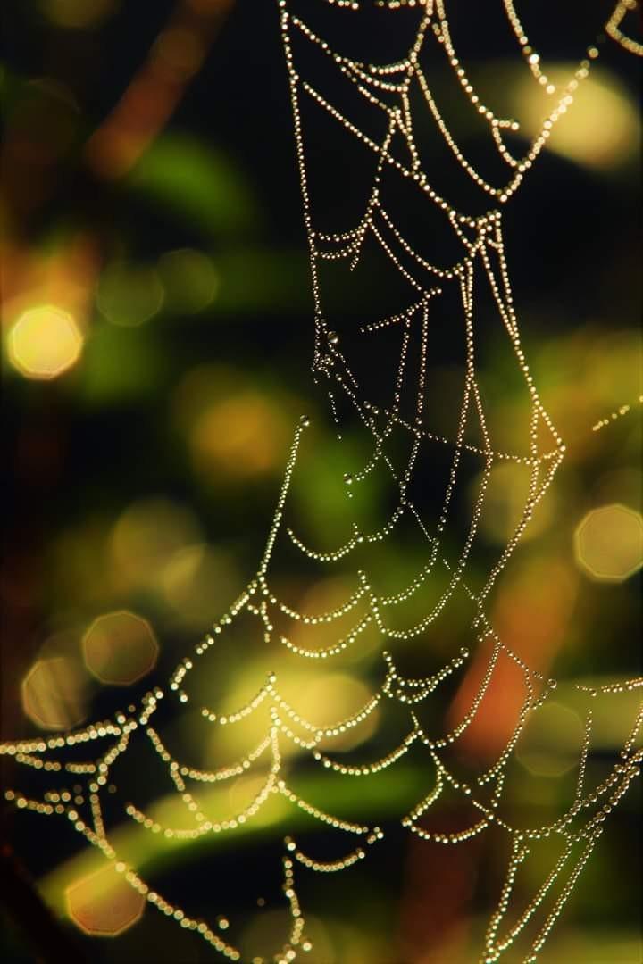 【爱摄影】树络蜘蛛缕_图1-12